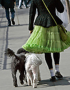 Spring in New York City brings out the best in its residents, both human and otherwise, as they stroll along the busy streets unburdened by winter's cold.