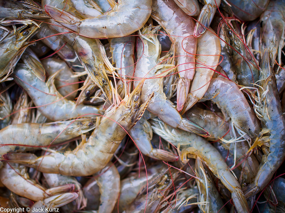 20 JUNE 2014 - SAMUT SAKHON, SAMUT SAKHON, THAILAND: Farm raised shrimp at a processing center in Samut Sakhon. Hundreds of thousands of migrant workers from Myanmar work in the Thai fishing industry. Samut Sakhon, (sometimes still called Mahachai, its historical name) is a large fishing port. Many Burmese live in the town and work in the fish process plants. Although hundreds of thousands of Cambodians fled Thailand last week after the military coup, the Burmese workers have stayed and are still working in many Thai towns.    PHOTO BY JACK KURTZ