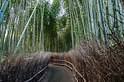 Popular for its path through a small bamboo grove, Arashiyama is a touristy district in the western outskirts of Kyoto, in Japan. Pleasure boats can be rented on the river near Togetsukyo Bridge.
