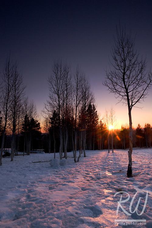 Aspen Trees at Sunset, Coconino National Forest, Arizona