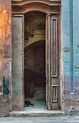 A Black cat walks through doorway at twilight.