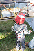 Cute little boy looking at reptiles at the Thousand Springs Art Festival at Ritter Island near Hagerman, Idaho. MR