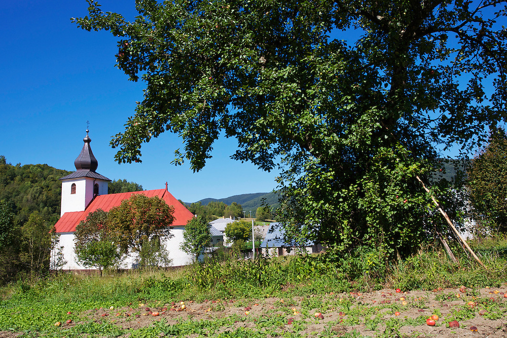 Apple tree at the border of a private alotment and the church of Nova Sedlica, Slovakia.