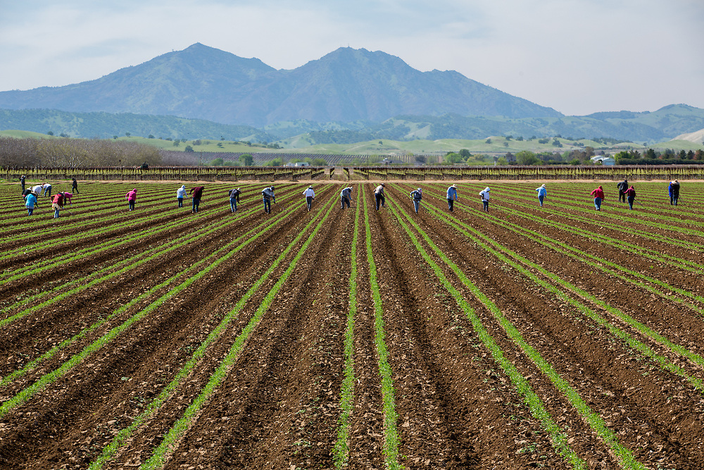 Workers in a field east of Mount Diablo.
