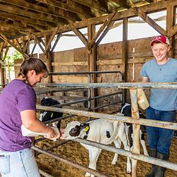Kerri and Jacob Scruton bottle feed young calves (Holsteins) at the Scruton dairy farm in Farmington, New Hampshire.