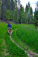Mountain biking on F.H. Stoltze Land & Lumber Co. property in the Haskill Basin. Flathead County, Montana.
