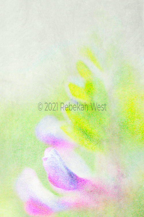 luminous after rain feel of tender fuschia and purple petals and buds with bright spring yellow and green leaf shapes fanning out, flowers sit lower left corner of vertical field with leaves continuing that line toward upper right, background top half grey, bottom half pastel spring wash of green, greenery underlayers and overlayers, soft and foggy, greenery, flower art, feminine, high resolution, licensing, iridescent, vertical, 2527 x 3791