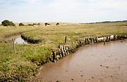 River bank wetland ecosystem mud salt-marsh Butley Creek, Suffolk, England, UK