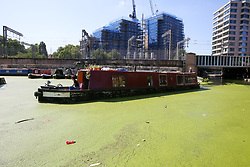 © Licensed to London News Pictures. 23/08/2019. London, UK. A boat passes through Regents Canal which is covered in green Algae. According to the Met Office, the temperatures are forecast to increase to 30 degrees celsius for the bank holiday weekend.  Photo credit: Dinendra Haria/LNP