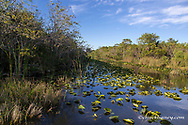 Wetlands in Everglades National Park, Florida, USA