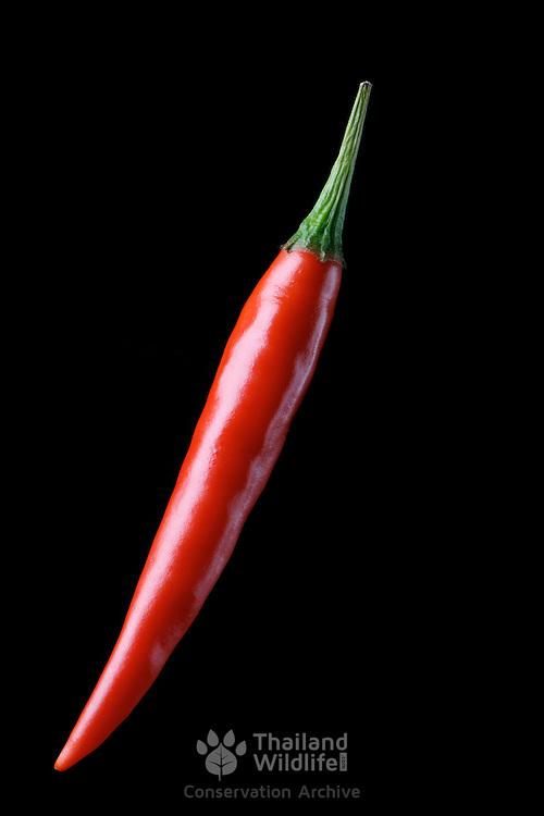 Hot bright red chilli pepper