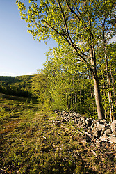 A stone wall lines an old hill farm field at the Moose Mountains Reservation in Middleton, New Hampshire.  Socitey for the Protection of New Hampshire Forests preserve.  Spring.