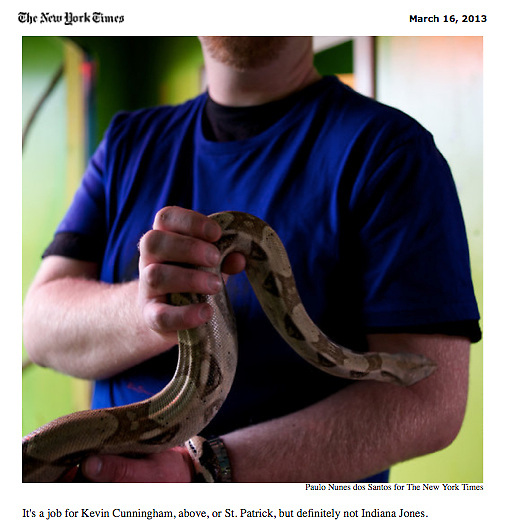 """Screengrab of """"Boom Over, St. Patrick's Isle Is Slithering Again"""" published in The New York Times"""