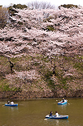 People boating on Imperial Palace moat in Tokyo during cherry blossom season