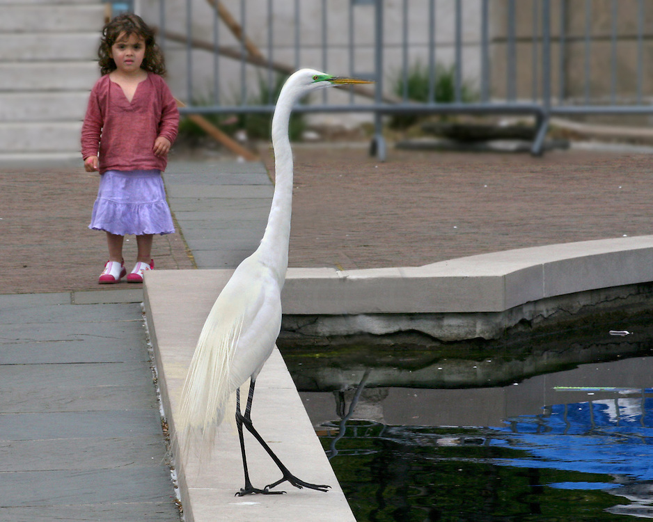 An egret at the Lily Pond is taller than the approaching little girl!