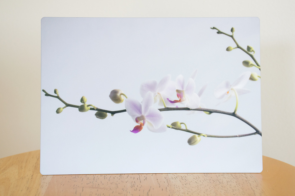 'Perfect Orchid' photograph printed on metal.