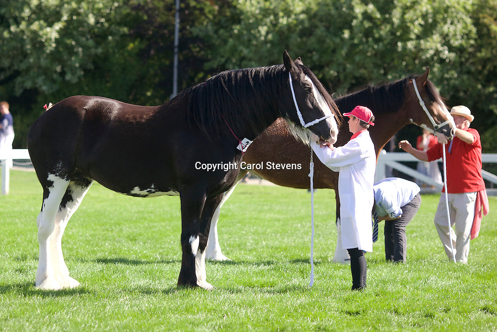 Butler Merchant &amp; Campbell Mesdames  8 tyrol Black Mare<br />