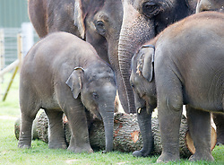 WHIPSNADE - UK- 11th April 2017: Her Majesty The Queen, accompanied by His Royal Highness The Duke of Edinburgh, will open the new Centre for Elephant Care at ZSL Whipsnade Zoo.<br /> <br /> Custom designed by award winning architects the Centre for Elephant Care at ZSL Whipsnade Zoo will provide a new home for the Zoo's nine-strong herd of Asian elephants. The luxurious barn, set amongst 20 acres of rolling paddocks, provides more than 700m squared of indoor space for the elephant herd, including eight month old calf Elizabeth. Elizabeth was named by zookeepers in honour of The Queen as she was born the day before Her Majesty's 90th birthday celebrations in 2016.<br /> <br /> Photograph by  Ian Jones