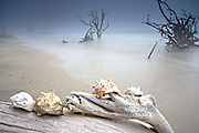 Fog on boneyard beach with sea shells at Botany Bay in Edisto Island, South Carolina. Rising tides along the coastline are eroding the beach slowly submerging the forest.