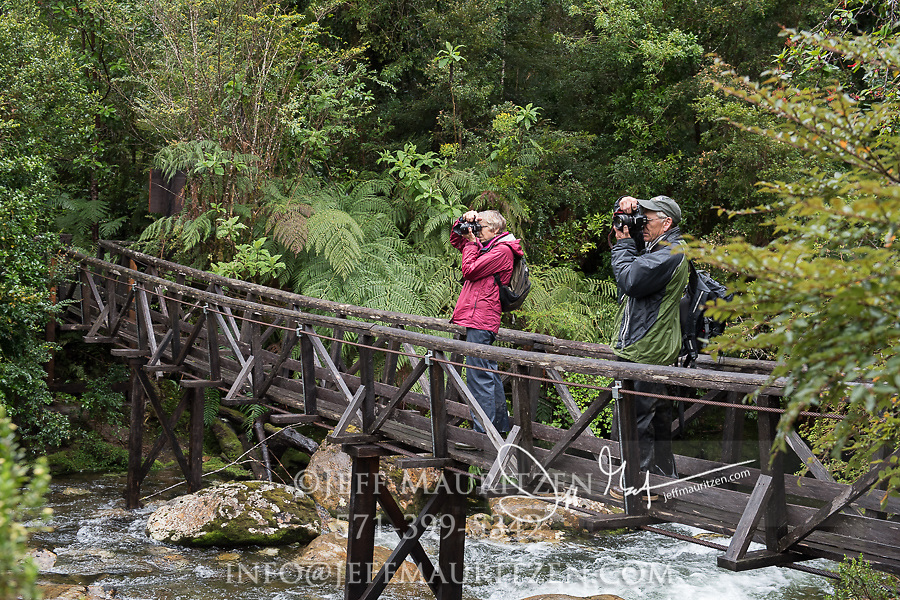 Two hikers take photos from a wooden bridge in Pumalin National Park, Chile.