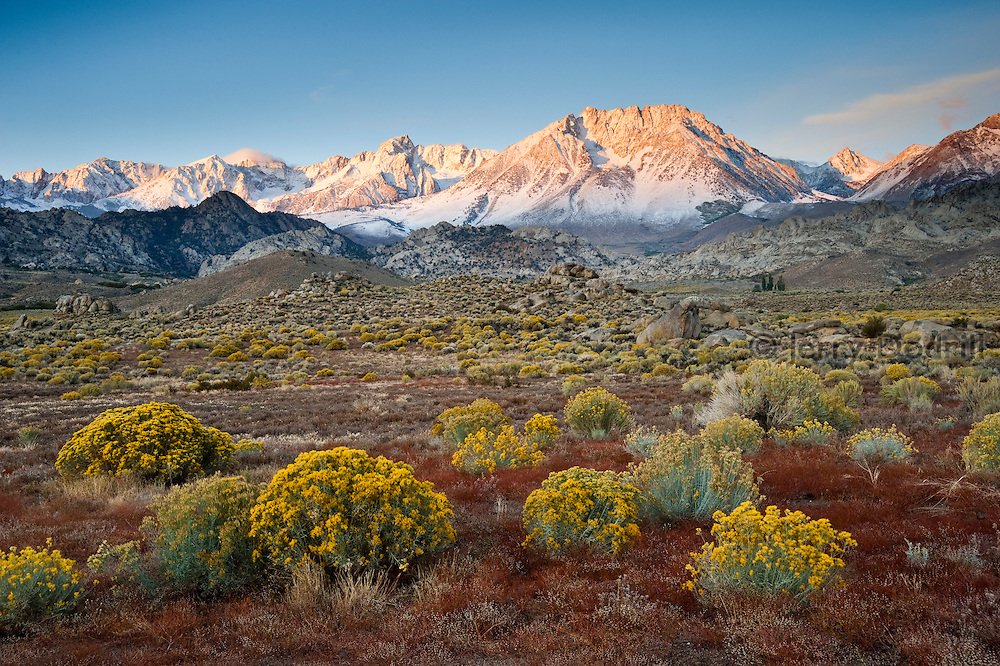 Autumn color at Sunrise Meadow below Basin Mountain and Mt. Humphreys in the Buttermilk Country, Eastern Sierra, Bishop, California