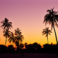 Panorama of palm trees silhouetted by a golden pink sunset.