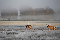 © Licensed to London News Pictures. 28/10/2019. London, UK. Deer graze in a frost and mist covered landscape on a bright winter morning in Richmond Park, London. The UK is due to see brighter weather over the next few days, following days of heavy rain which caused flooding in parts. Photo credit: Ben Cawthra/LNP