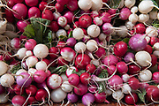 Colorful radishes for sale at an open-air street market.