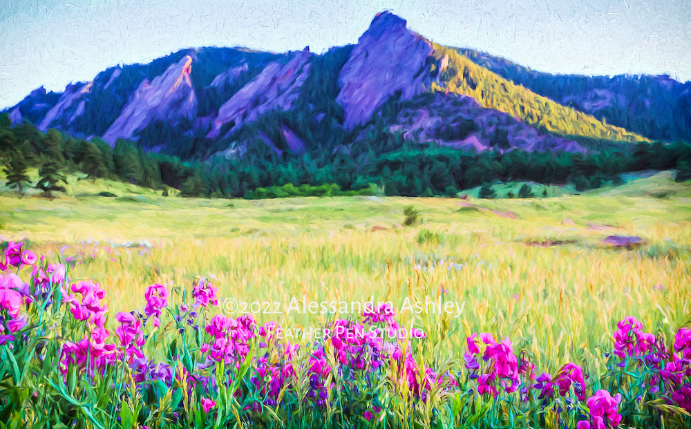 The Flatirons and sweet pea wildflowers of Chatauqua Park, Boulder, Colorado, with sunset rays on a summer evening. Painted effects blended with original photo.