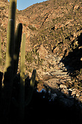 Saguaro cactus line the lower falls of Tanque Verde Falls at Tanque Verde Creek in Redington Pass, Rincon Mountains, Sonoran Desert, Tucson, Arizona, USA.