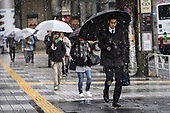 JAPAN : Tokyo, snow fall in February