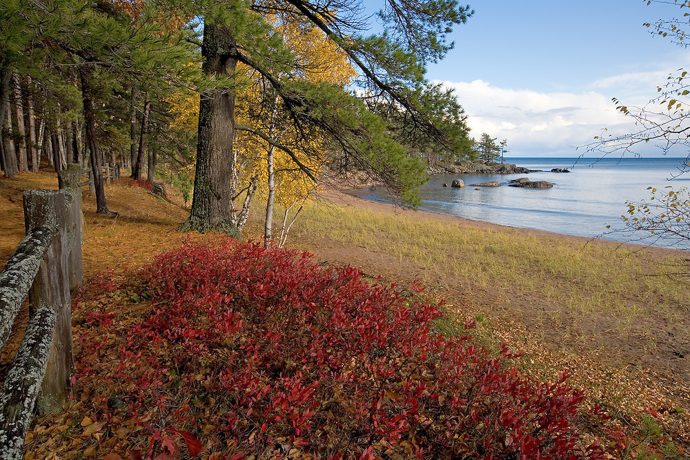 Wetmore landing in autumn, red blueberry leaves