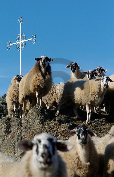 07/01/05 - OLLOIX - PUY DE DOME - FRANCE - Filiere ovine, race RAVA du GAEC DABERT - Photo Jerome CHABANNE
