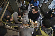 CHENGDU, CHINA - FEBRUARY 02: (CHINA OUT) <br /> <br /> Workers carry the anesthetic leopard to its new room at Chengdu Zoo on February 2, 2016 in Chengdu, Sichuan Province of China. 9 leopards and panthers moved to new rooms to welcome the New Year at Chengdu Zoo.<br /> ©Exclusivepix Media