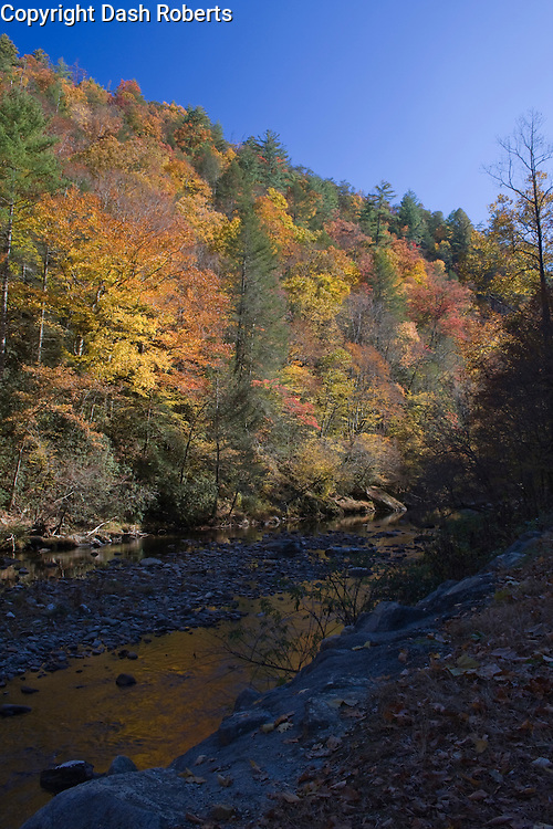 Fall colors reflect in a stream in the Great Smoky Mountains National Park.