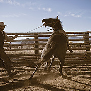 Come on , Lane Crafton , Draging Y ranch Horse parie , Montana