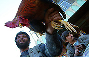 Arkansas Democrat-Gazette/BENJAMIN KRAIN 11-05-03<br /> A bird salesman hands a chicken to a customer at Kaferoshi Bazaar in Kabul. The market is the largest place in Afghanistan to buys hundreds of species of birds used for food, sport and pets.