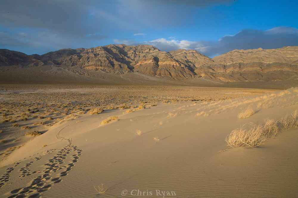 Footprints in the Eureka Dunes, Death Valley, California