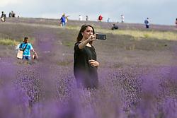 August 6, 2017 - Ickleford, United Kingdom - Image licensed to i-Images Picture Agency. 06/08/2017. Ickleford, United Kingdom.  Visitors at a lavender farm in Ickleford , Hertfordshire, United Kingdom. Picture by Dinendra Haria / i-Images (Credit Image: © Dinendra Haria/i-Images via ZUMA Press)