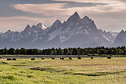 A herd of North American Bison graze in the grasslands along Elk Ranch Flats with Mount Moran and the Grand Teton mountains at dusk at the Grand Teton National Park in Moran, Wyoming.