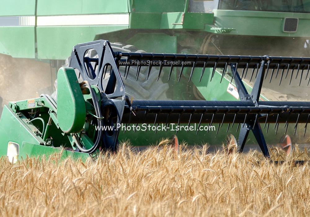 combine harvester harvesting wheat. Photographed in Israel, Kibbutz Ruhama, Negev Desert, in June