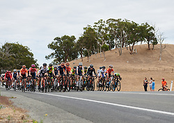 The peloton all together at Santos Women's Tour Down Under 2019 - Stage 1, a 112.9 km road race from Hahndorf to Birdwood, Australia on January 10, 2019. Photo by Sean Robinson/velofocus.com