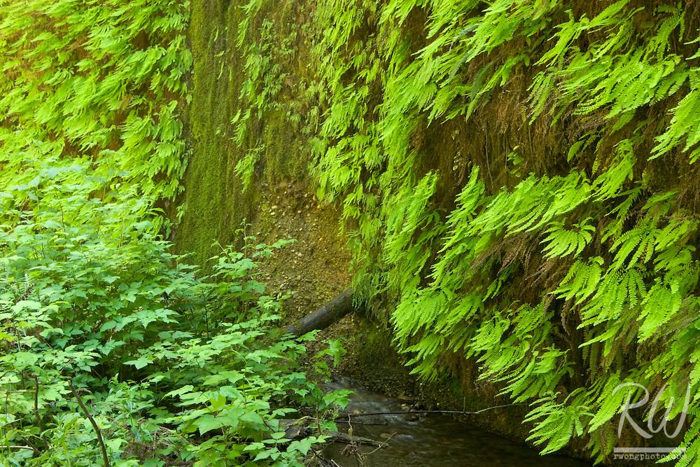 Fern Canyon, Prairie Creek State Park, California