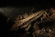 Godavaya Shipwreck Excavation, Sri Lanka--A 2,000-year-old spear head found in grid square P10.