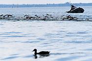 Athletes and a duck <br /> Women's 10Km <br /> Open Water Swimming Balatonfured<br /> Day 03  16/07/2017 <br /> XVII FINA World Championships Aquatics<br /> Lake Balaton Budapest Hungary  <br /> Photo Andrea Staccioli/Deepbluemedia/Insidefoto