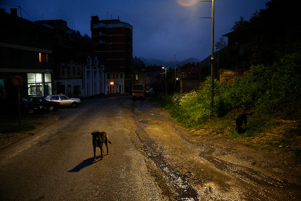 Dogs roam the city center of Srebrenica in search of scrap food at dusk...Matt Lutton for The International Herald Tribune..Capture of Ratko Mladic. Srebrenica, Bosnia and Herzegovina. May 29, 2011.