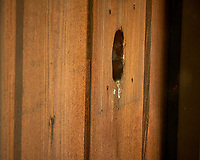 House Wren Nest at My Front Door. Image taken with a Fuji X-H1 camera and 80 mm f/2.8 macro lens (ISO 1600, 80 mm, f/11, 1/80 sec).