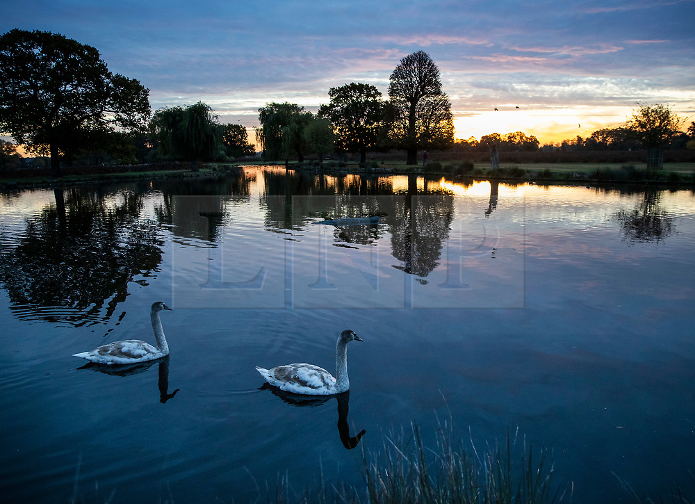 © Licensed to London News Pictures. 03/11/2018. London, UK. Heron Pond at sunrise in Bushy Park, south west London. The remains of hurricane Oscar are expected affect parts of the UK overnight bringing high winds and rain. Photo credit: Peter Macdiarmid/LNP