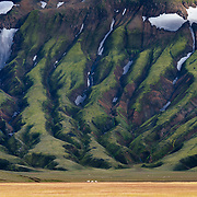 Lambs graze in the lower lava drainages in the rhyolite hills of Landmannalaugar National Park in Iceland.