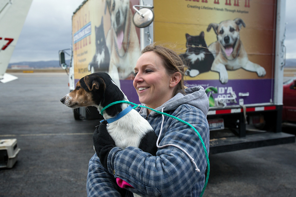 Humane Society volunteer Christina Hull holds one of 30 dogs transported from a shelter in California Saturday at the Coeur d'Alene Airport. The Dogs will be given a new residence at the Kootenai Humane Society which is a no-kill shelter.